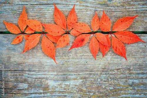 czerwony-jesien-leafage-dziki-winogrono-na-popielatym-drewnianym-stole