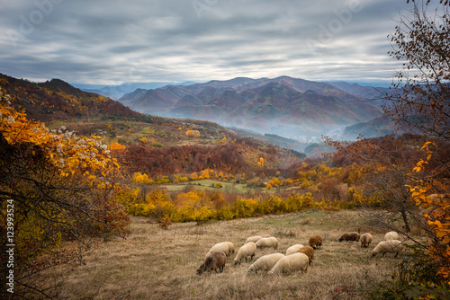 Staande foto Bleke violet Golden autumn / Amazing autumn view of a mountain meadow in the central Balkan Mountains, Bulgaria