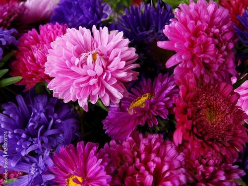 Poster de jardin Dahlia multicolor asters close up
