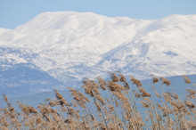 Mount Hermon With Reeds In The...