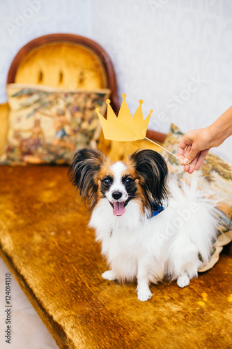 Pleasing A Cute Papillon With A Paper Crown And Hat On Sitting On A Inzonedesignstudio Interior Chair Design Inzonedesignstudiocom