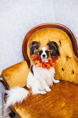 Super A Cute Papillon With A Paper Crown And Hat On Sitting On A Inzonedesignstudio Interior Chair Design Inzonedesignstudiocom