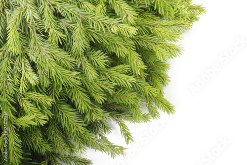 Garden Poster Plant fir branches isolated