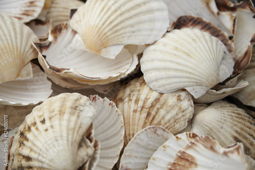 Fotografia, Obraz  A whole page of scallop shells background texture