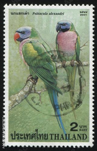 Fotografia  parrots