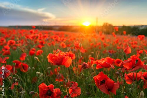 Fototapeta Landscape with nice sunset over poppy field obraz na płótnie