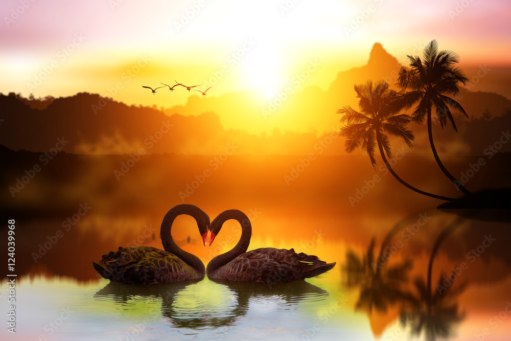 beautiful black swan in heart shape on lake sunset .Love bird concept