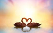 Beautiful Black Swan In Heart ...