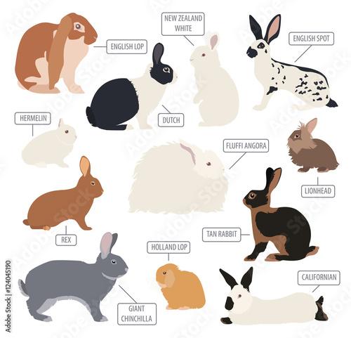 Valokuva  Rabbit, lapin breed icon set. Flat design