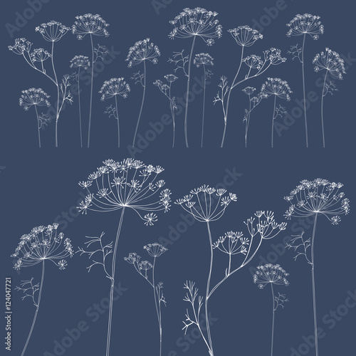 Fotografia Dill or fennel flowers background.