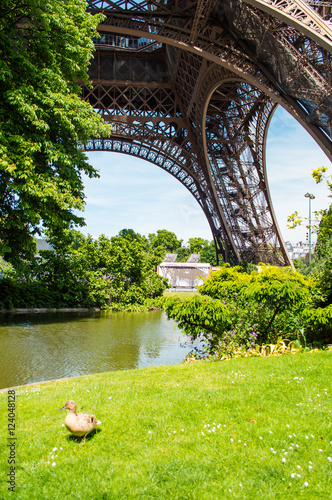 Fotografia  Eiffel Tower view from Champ de Mars in Paris, France
