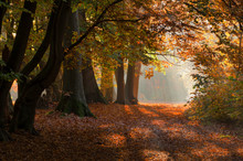 Beautiful Autumn Colors In A Forest In The Netherlands.