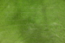 Green Paint Leather Background Or Texture