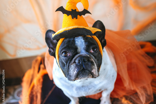 Fotografija Dog with halloween costume