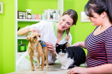 Cat And Dog Together At Vet Or...