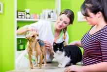 Cat And Dog Together At Vet Or Pet Hairdresser