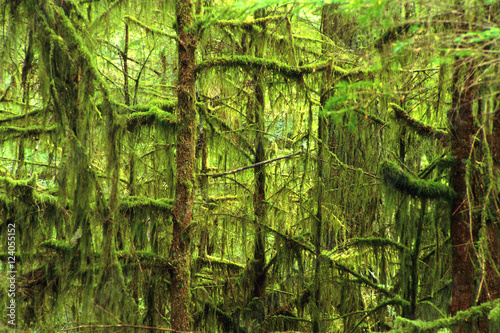 Moss-Covered Trees