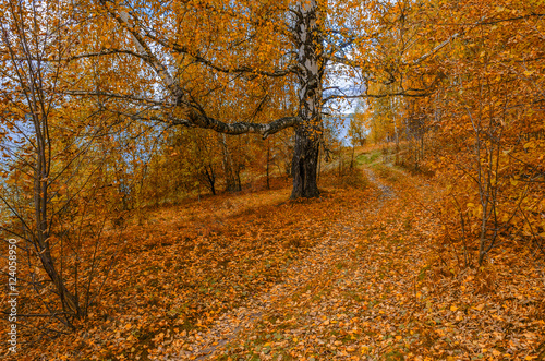 Foto op Canvas Herfst In The Autumn Forest