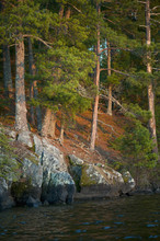 Rock And Trees Along The Shoreline; Lake Of The Woods, Ontario, Canada