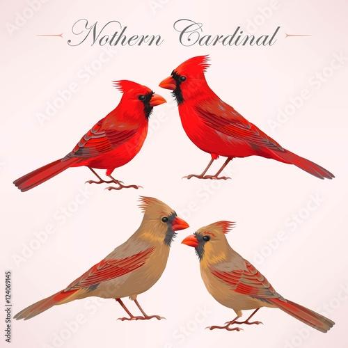 Photo  Set of nothern cardinals