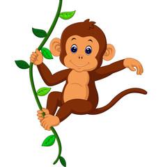 Fototapeta cute monkey