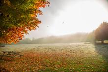 Orange Autumn Tree And Bench I...