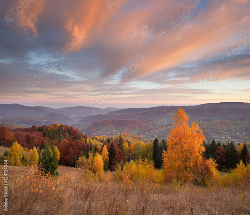 Poster Lavendel Autumn landscape with a beautiful forest in the mountains