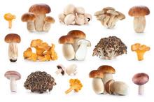 Boletus Edulis, Russula Amethystina, Champignon, Pleurotus Ostre