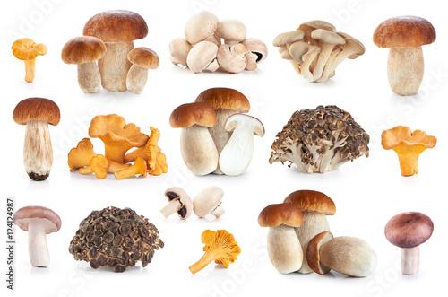 Boletus edulis, russula amethystina, champignon, pleurotus ostre Fototapet