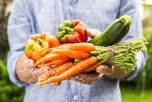 Fresh Wet Vegetables In Gardener's Hands - Spring