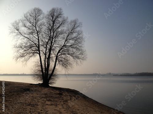 Fotografie, Obraz  Eenzame boom op een verlaten eiland met een zonsondergang