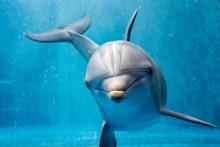 Dolphin Close Up Portrait Deta...