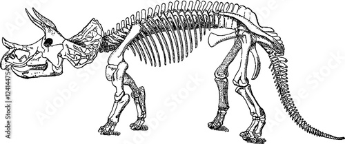 Vintage Image Triceratops Skeleton Buy This Stock Illustration And