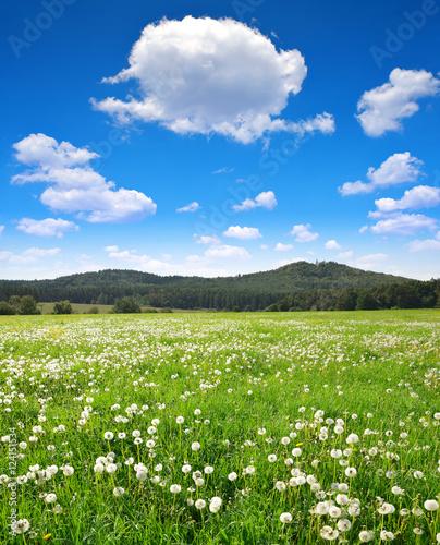 Staande foto Lente Blooming dandelions on meadow in sunny day. Spring landscape.