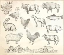 Farm Collection Vector.