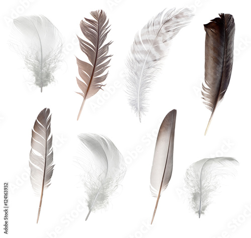 Collection of different feathers isolated on white background