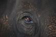 Closeup Of An Animal's Eye