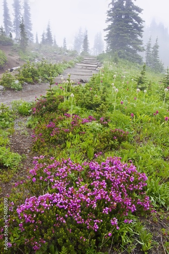 A Hiking Trail In The Fog In Paradise Park In Mt. Rainier National Park; Washington, United States Of America
