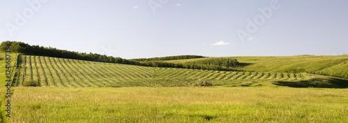 Cut Hay Field On A Rolling Hillside; Calgary, Alberta, Canada