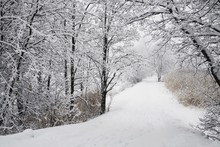 View Of Snow Covered Country Road Through Forest In Winter