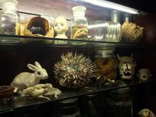 Bizarre Oddities And Scientific Specimens On Shelf