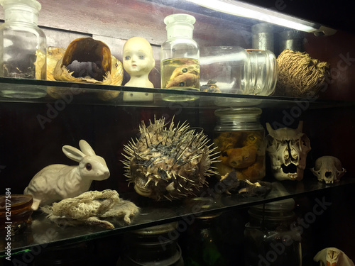 Valokuva  Bizarre oddities and scientific specimens on shelf