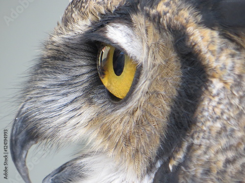 Cadres-photo bureau Chouette Owl