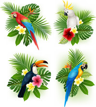 Tropical Flower And Bird Colle...