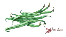 Green French Beans. Hand Drawn...