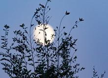 The Moon Behind A Tree At Dusk