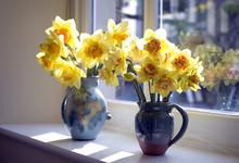 Cheerful Yellow Vases Of Daffodils