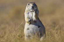 Prairie Dog Grasslands National Park;Saskatchewan Alberta