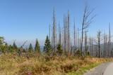 Waldsterben Dreisesselberg - Naturschutzgebiet