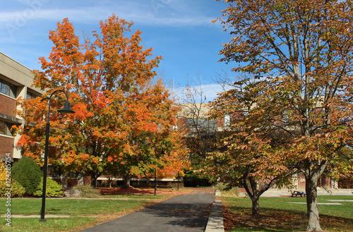 Keuken foto achterwand Begraafplaats Fall foliage in front of buildings